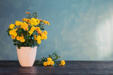 chrysanthemum in pot on background green wall Banco de Imagens