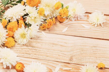 white and yellow  chrysanthemums on  wooden background