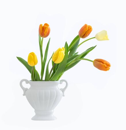 yellow and orange  tulips isolated on white background 版權商用圖片