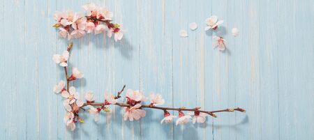 pink cherry flowers on wooden background 免版税图像