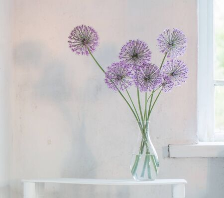 violet round flowers in glass vase on white background