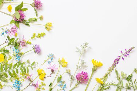 beautiful wild flowers on white background Stock fotó