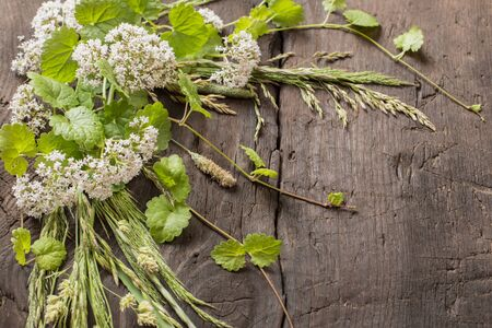 wild plants on old dark wooden background Stock Photo