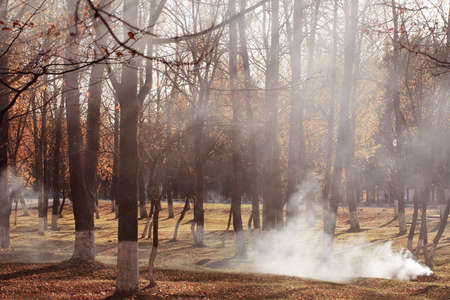Autumn park where leaves are burned. Hydrocarbon pollution Stock Photo
