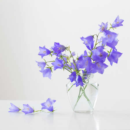 bluebell flowers in glass jar on white background