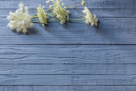 white wild flowers on blue wooden background Stock Photo