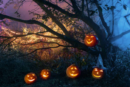 Halloween pumpkins in night mystery forest
