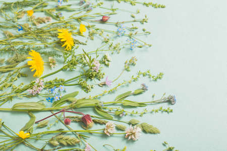 different wild flowers on paper background
