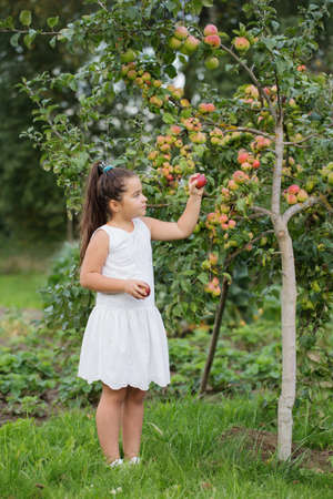happy little girl with apples in orchard