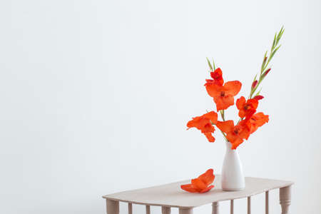 red gladiolus in vase on white background