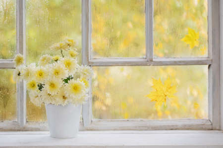 chrysanthemums in vase on windowsill in autumn Foto de archivo