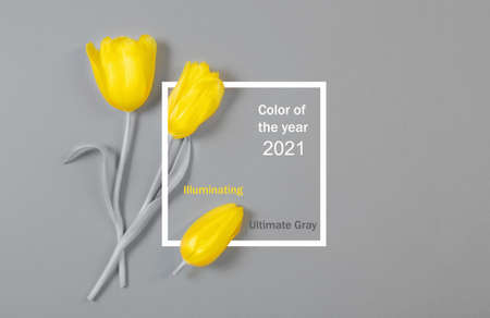 yellow tulips on gray background, color of 2021