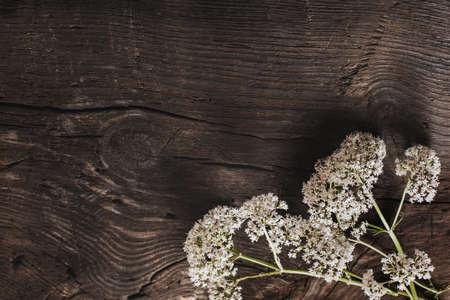 valeriana officinalis on old dark wooden background Stock Photo