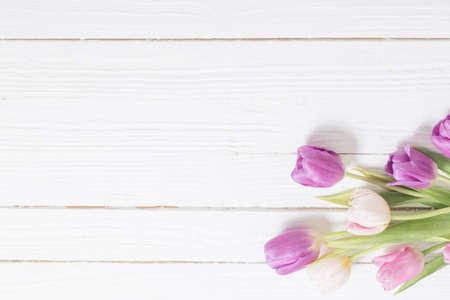 在白色木背景的美丽的郁金香
