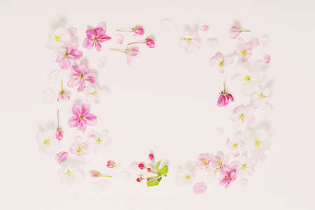 pink and white apple flowers on white background