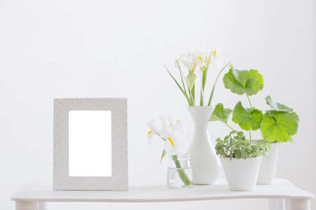 white frame, green plants and spring flowers on shelf on white background