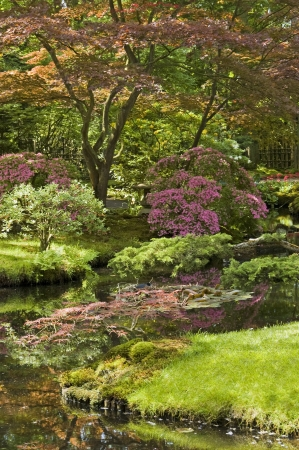 Japanese garden in the Netherlands photo