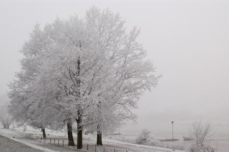 ijssel: Frosted trees near the river IJssel