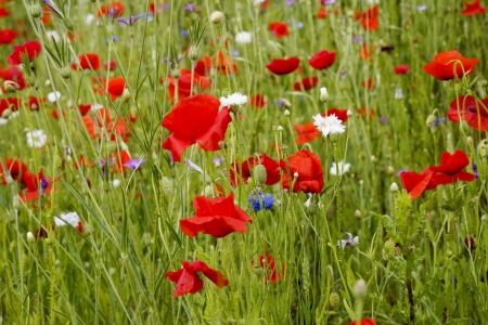 Field with wild flowers Stock Photo - 15417081