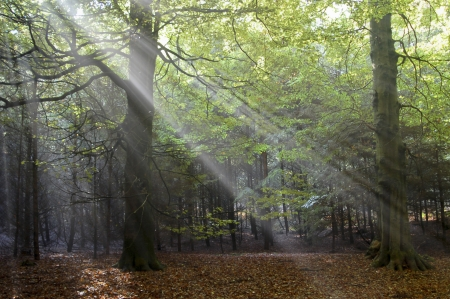 Sun rays in forest photo