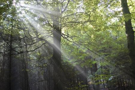 Sun through aurumn leaves photo