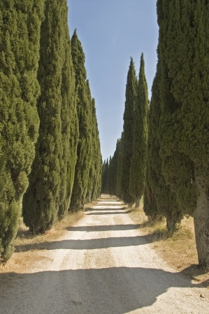 tuscon: Typical Tuscon lane with cypresses Stock Photo