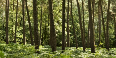 Forest with ferns photo