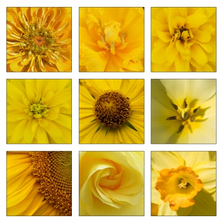Collage of yellow flowers photo