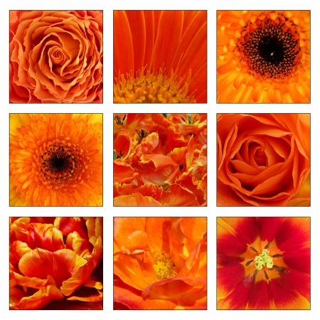 Collage of orange flowers photo