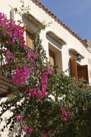 Bougainville on house photo