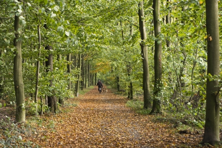 lonesome: Man walking the dog in the autumn forest Stock Photo