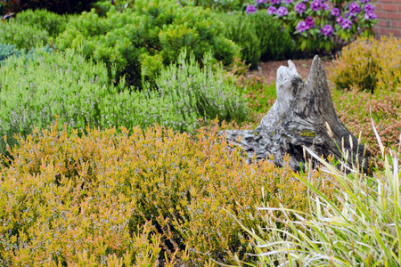 heather: Heather garden with tree trunk and rhodondendron