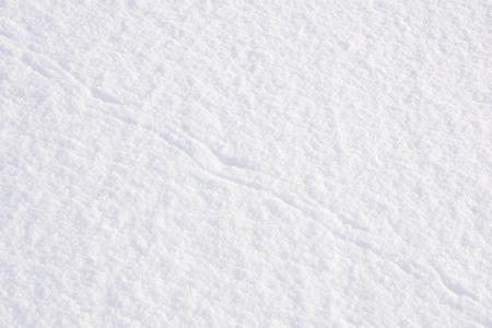huellas de animales: Antecedentes de nieve con huellas de animales