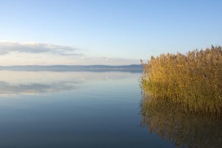 Lake Balaton with reed in winter