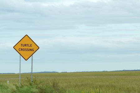 Warning turtle crossing along the road from Savannah to Tybee Island