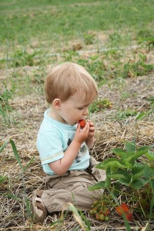 blond boy: A Child Is Eating A Strawberrie In A Farm