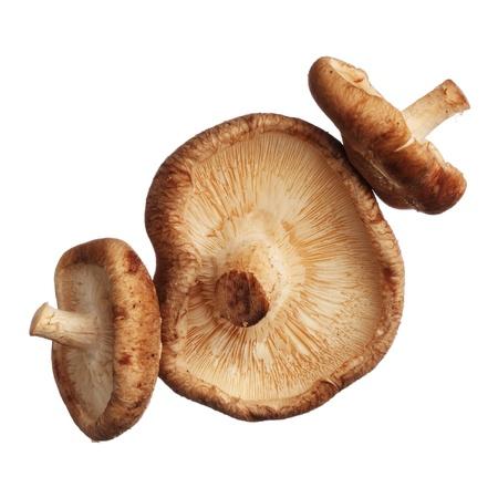Shitake mushrooms isolated on white background, close up 版權商用圖片