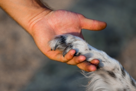 Dog paw and human hand   photo