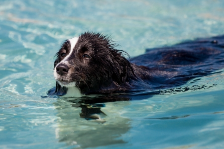 Swimming dog photo