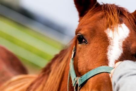 Human hand strokening an horse Stock Photo