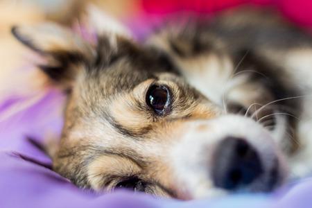 Sleeping dog on the bad photo