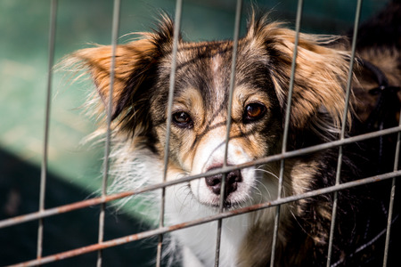 Dog behind bars - abandoned waiting for a home photo