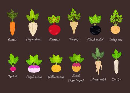 タイトルを持つ異なる根菜類のコレクション。フラットスタイルのベクトルイラスト