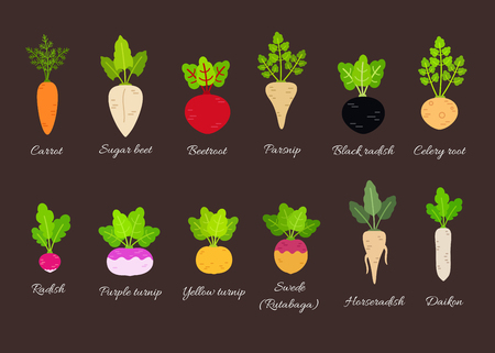Collection of different root vegetables with titles. Vector illustration in flat style Vettoriali