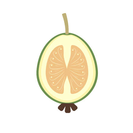 Feijoa in cut half fruit flat design Illusztráció