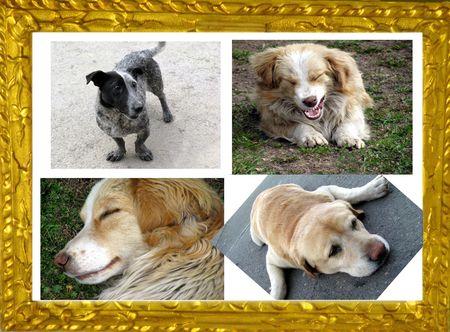 sweet puppys photo