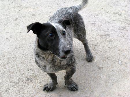 cute doggy photo