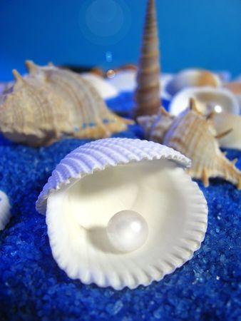 perlas: conchas y perlas
