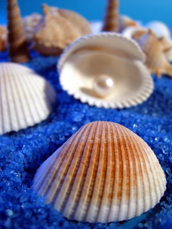 shells and pearls Stock Photo