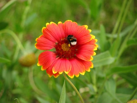 flower and bees on it photo